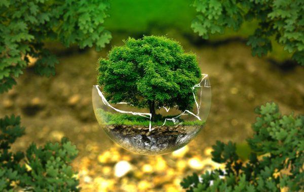 Právo životního prostředí